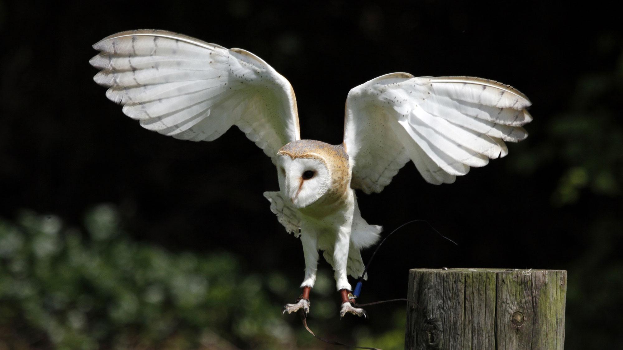 Walworth Castle Birds Of Prey